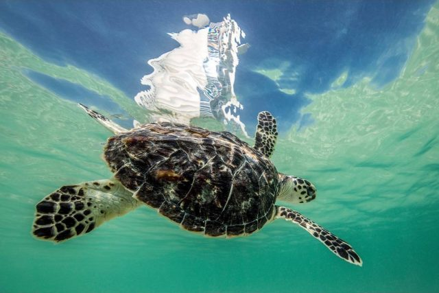 The Dubai Turtle Rehabilitation Project free things to do in Dubai