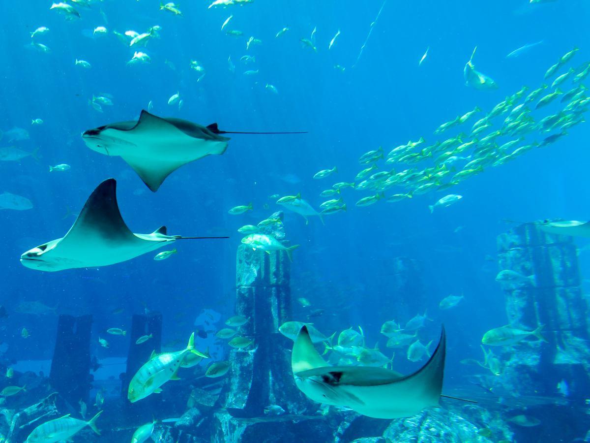 The Lost Chambers Aquarium at Atlantis Dubai