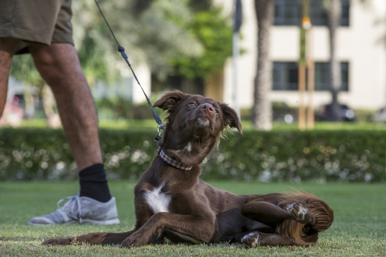 dubai-dog- Cropped (1)