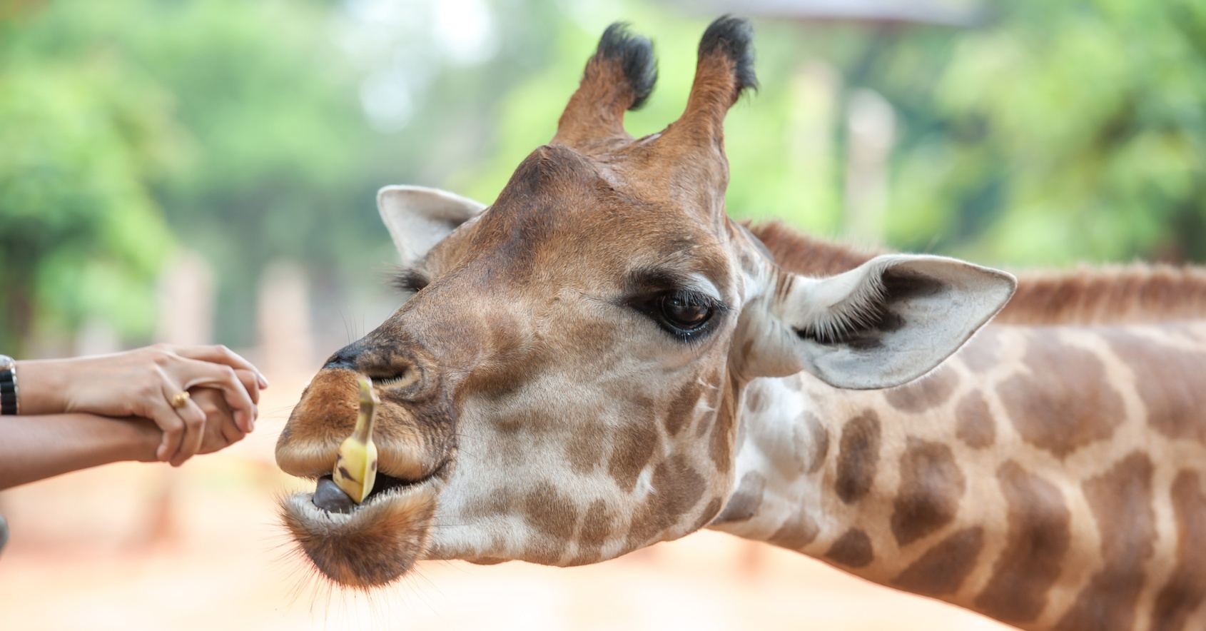 dubai-safari-park