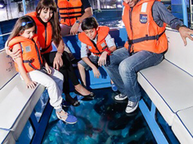 7 Adventures to try at Aquariums in Dubai - Dubai Aquarium Dubai Mall