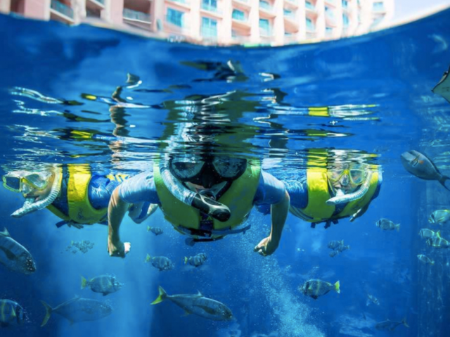 7 Adventures to try at Aquariums in Dubai - the Lost Chambers Aquarium Atlantis the Palm