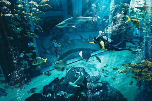 dubai adventure bucket list - diving lost chambers aquarium atlantis dubai