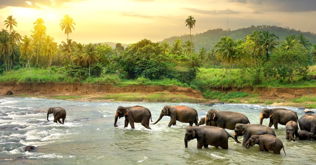 travel-from-dubai-sri-lanka-eid-holiday- Cropped (1)