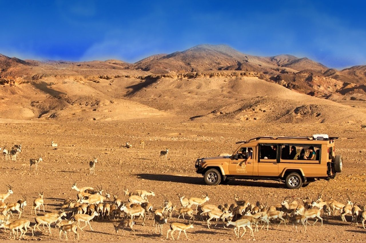 weekend trips from dubai explore uae sir-bani-yas-abu-dhabi Cropped