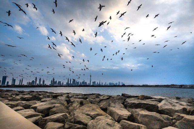 dubai-skyline-views-pearl-jumerirah-burj-khalifa-by-the-sea-rocks-birds