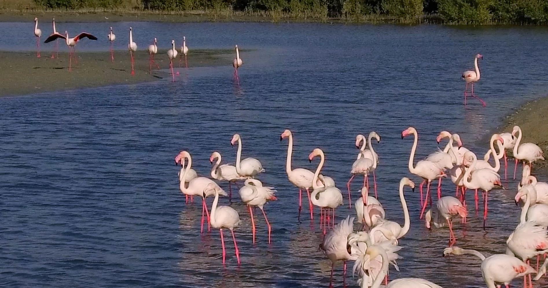 free-things-to-do-in-dubai-flamingos-in-dubai-ras-al-khor-wildlife-sanctuary