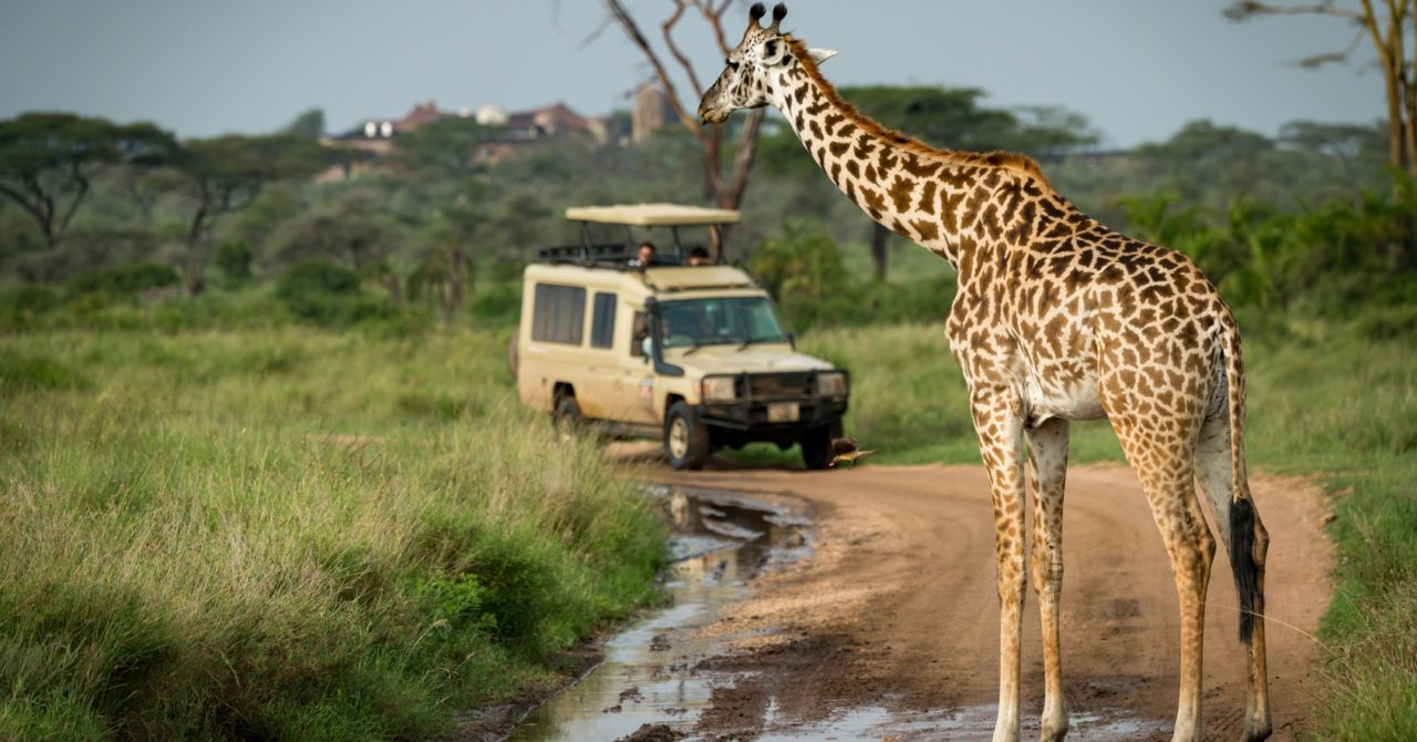 best-african-safari-holidays-0