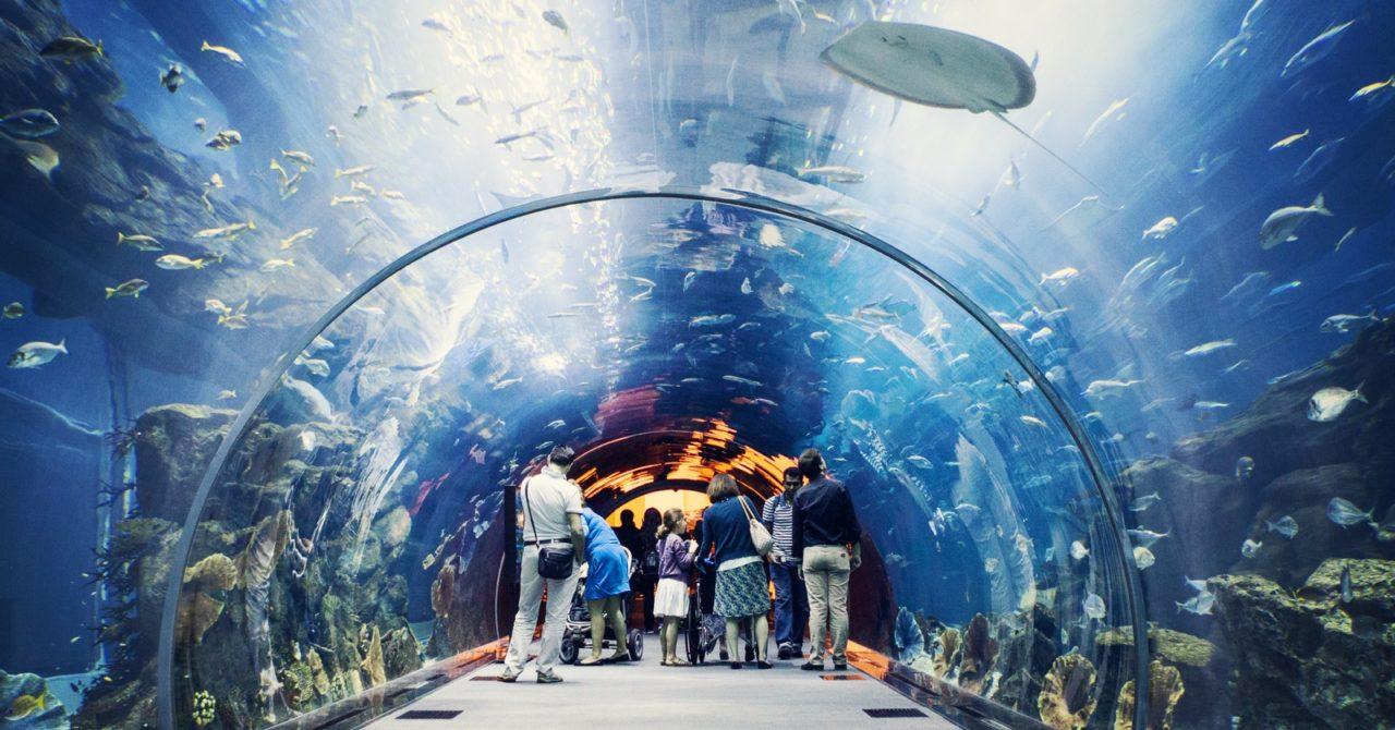 Dubai-Mall-Aquarium Cropped